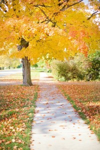 sidewalk under tree in the fall