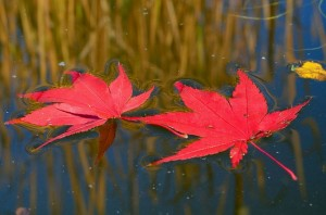 leaves in a lake