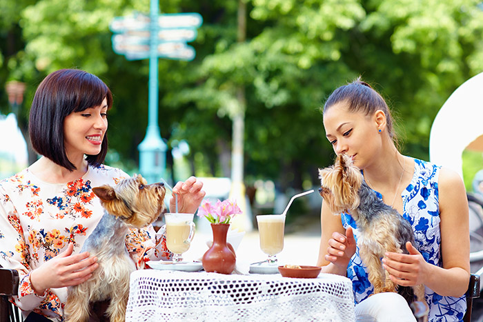 Women with dogs sitting in street cafe